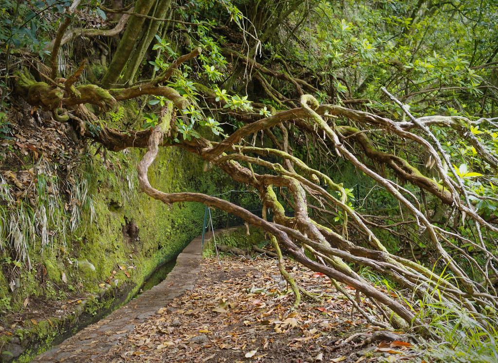 Baum und Levada