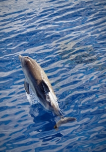 Wal- und Delfinsafari 2, Madeira