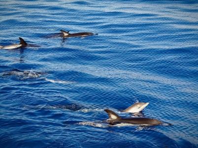 Wal- und Delfinsafari 3, Madeira