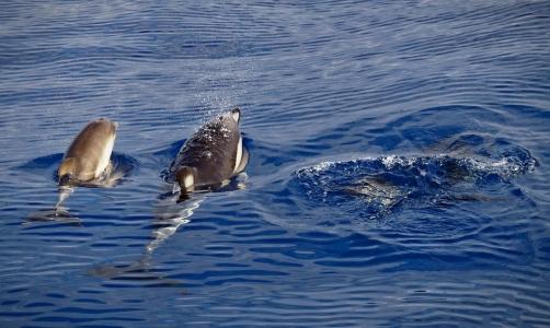 Wal- und Delfinsafari 4, Madeira