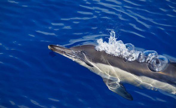 Wal- und Delfinsafari 5, Madeira