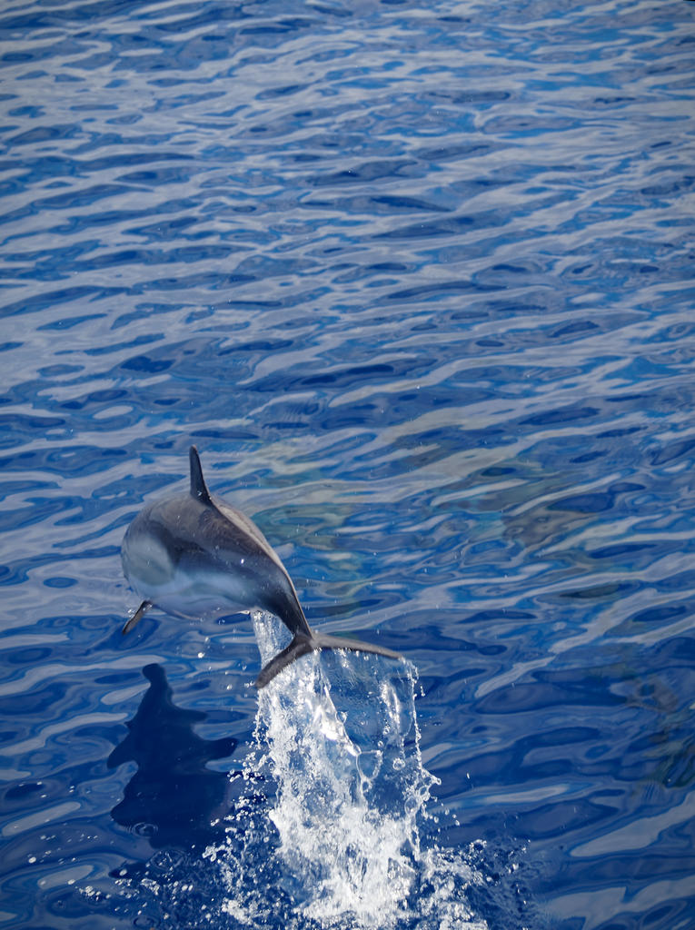Wal- und Delfinsafari, Madeira