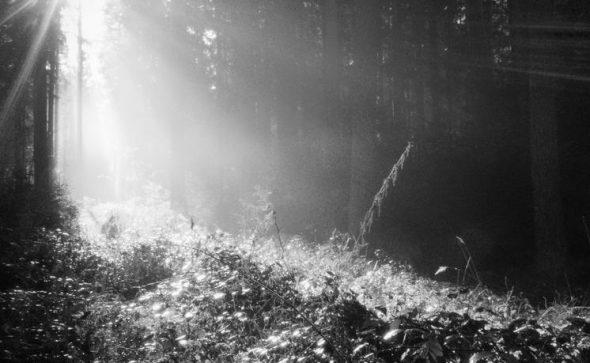 Sonne im nebligen Wald