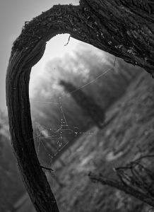 Spinnennetz im Dezember