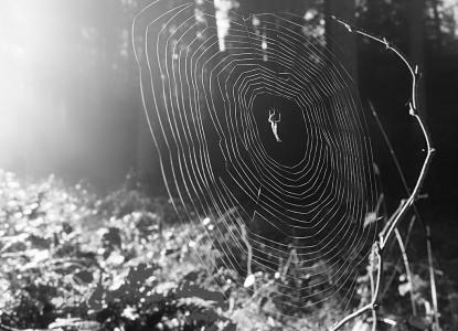 Spinnennetz - schwarzweiss