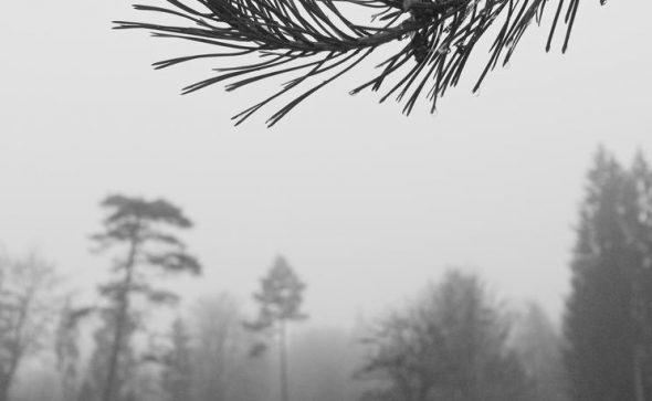 Trees - near and far