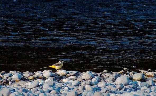 Vogel im Naturschutzgebiet untere Alz