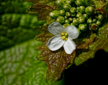 Wunderbare Pflanzenwelt