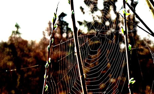 Spinnennetz - bearbeitet