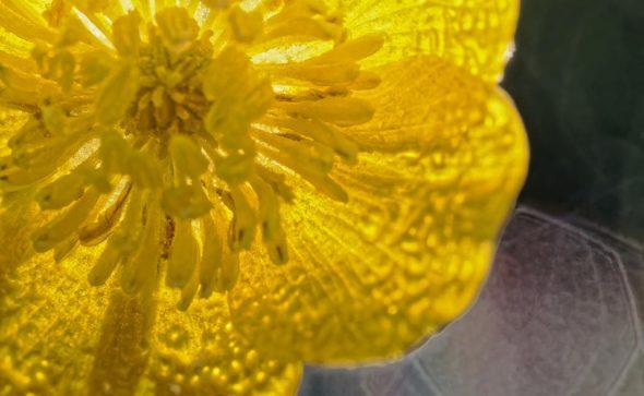 Gelb und durchscheinend