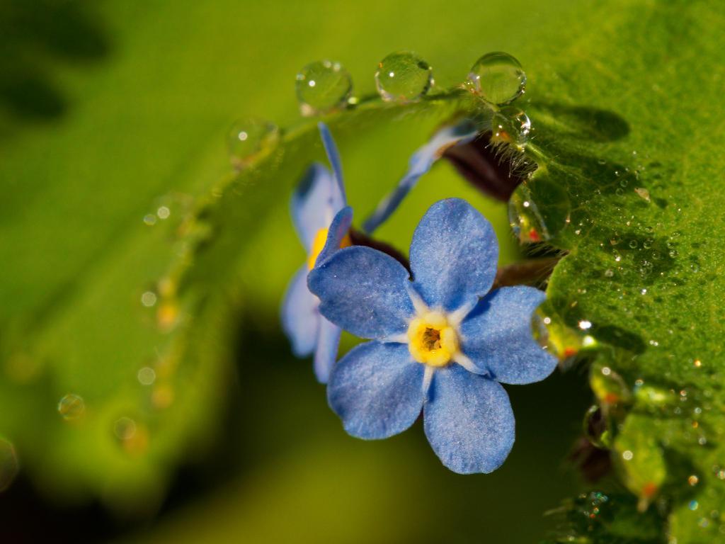 Blume mit Morgentau