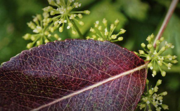 Der Herbst in Rot-Grün