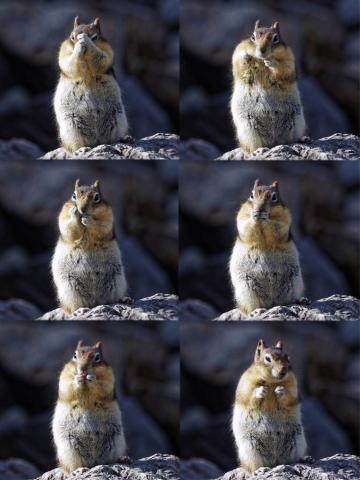 freches Squirrel